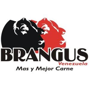 Información General de Brangus - Venezuela